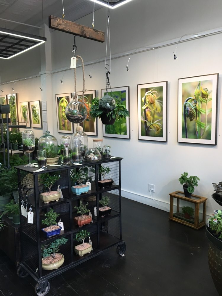 Cultivate Urban Rainforest & Gallery -
