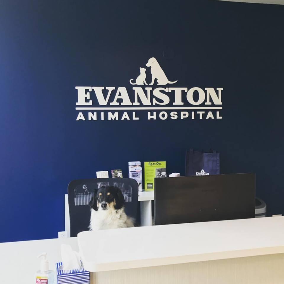Evanston Animal Hospital -
