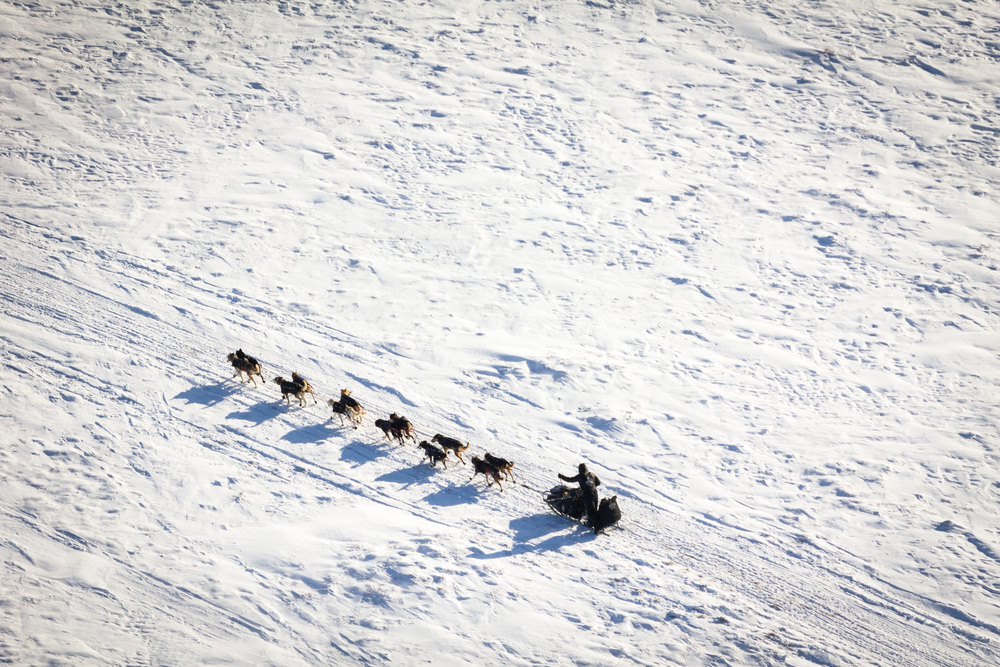 Very_large_sled-dogs-flipped